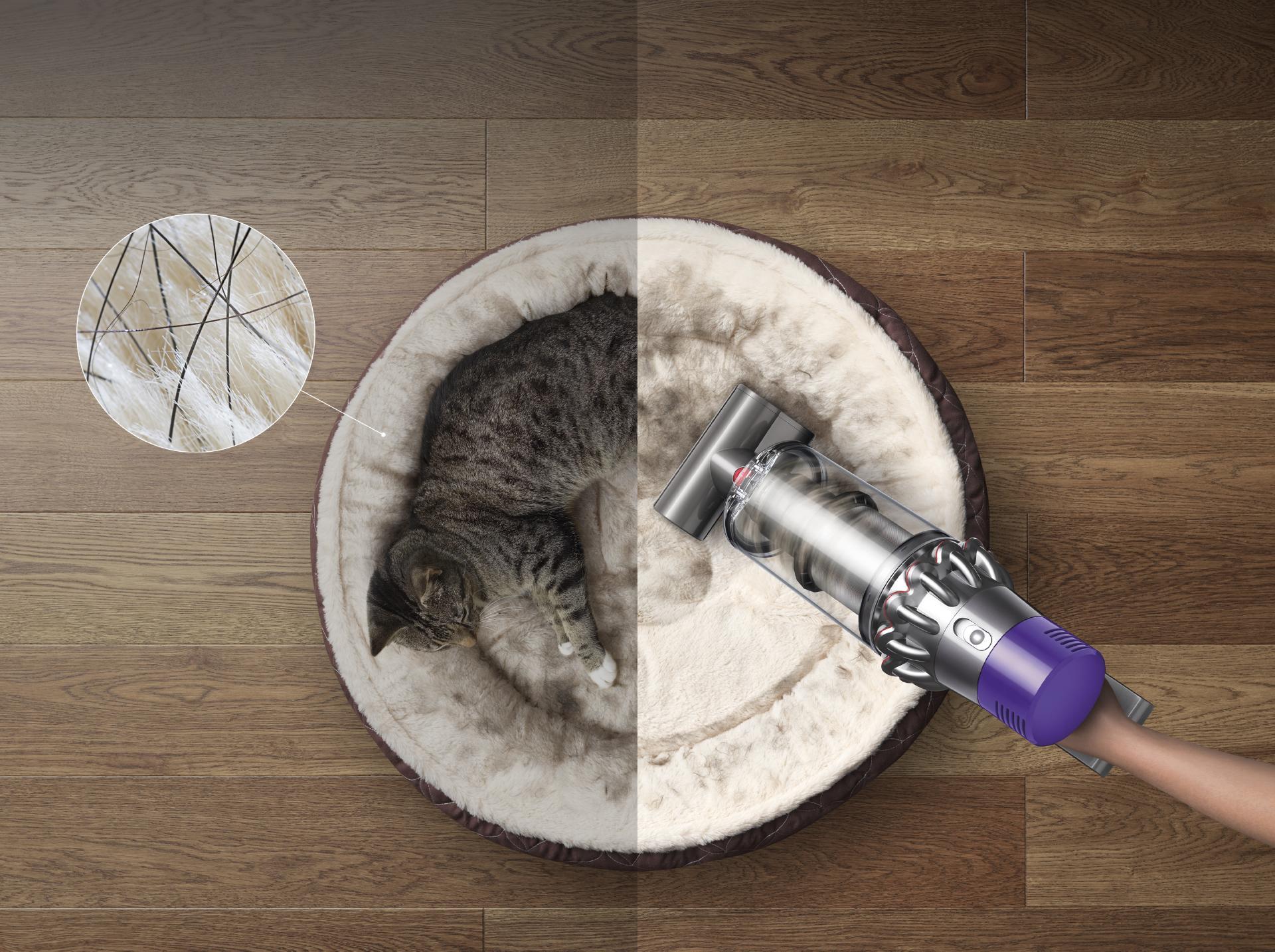 Kedi sepette gösterimi