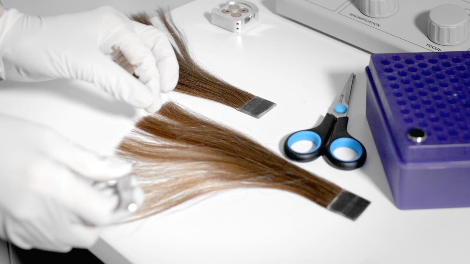 Real hair being tested in a laboratory.