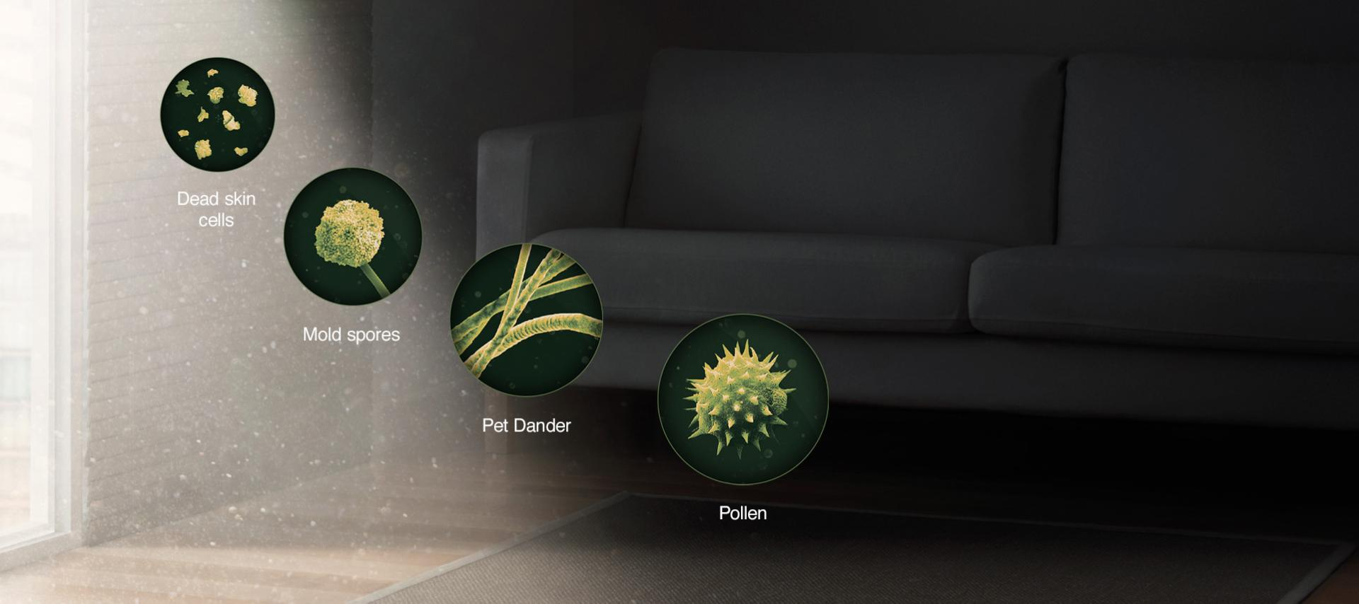 Images of different bacteria/pollutants and allergens found around the home