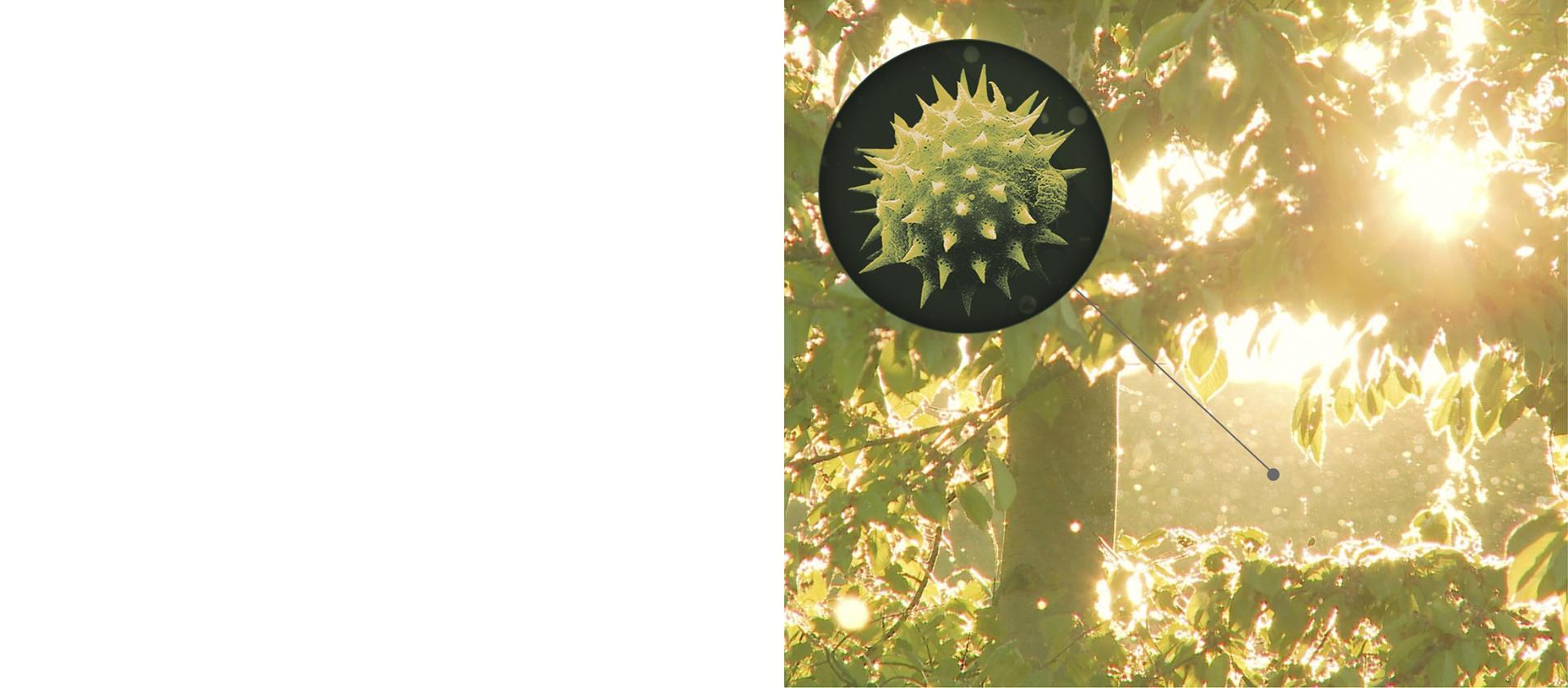 ağaçtaki polen partiküllerin yakın gösterimi