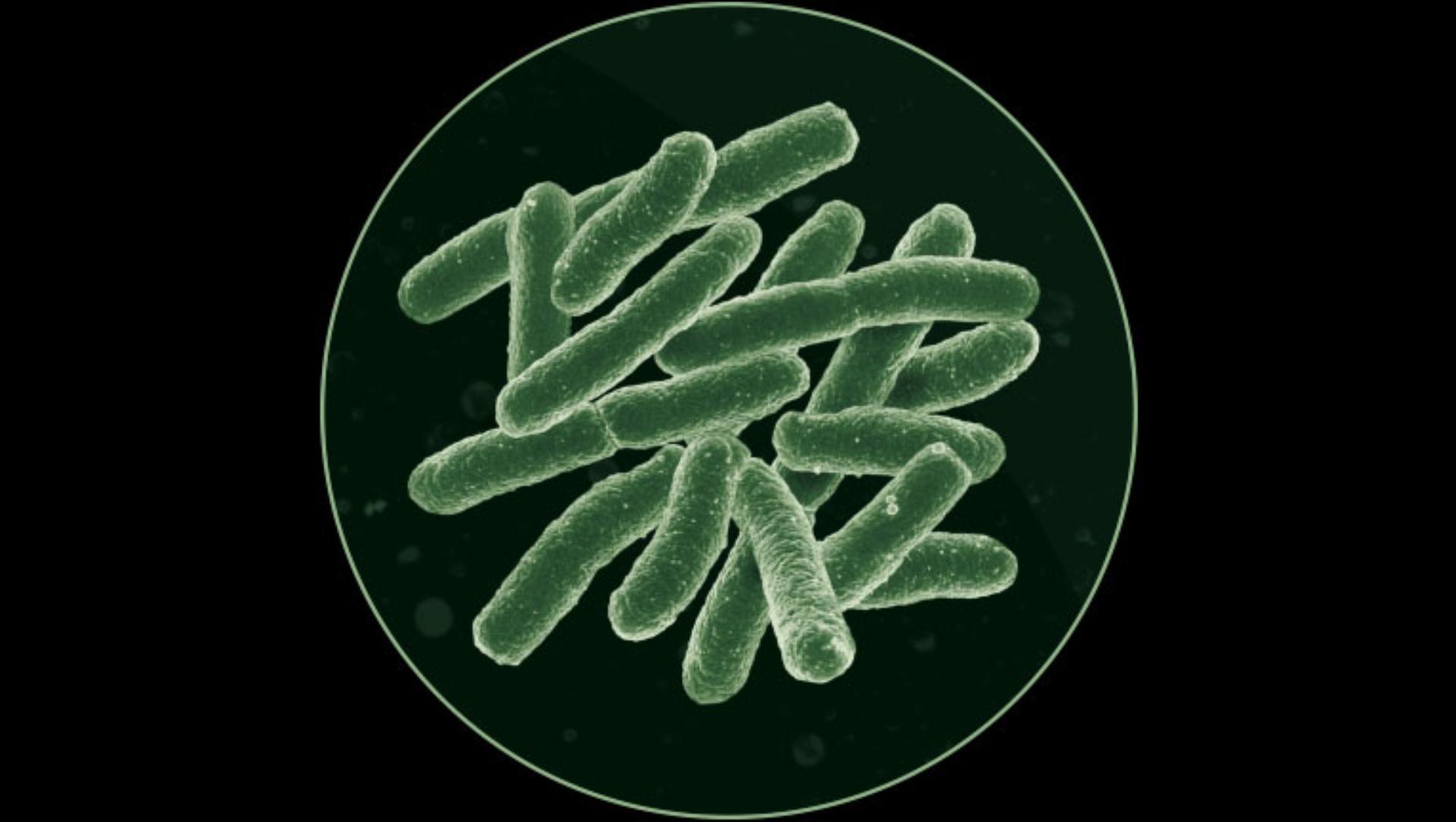 박테리아와 곰팡이의 확대 이미지