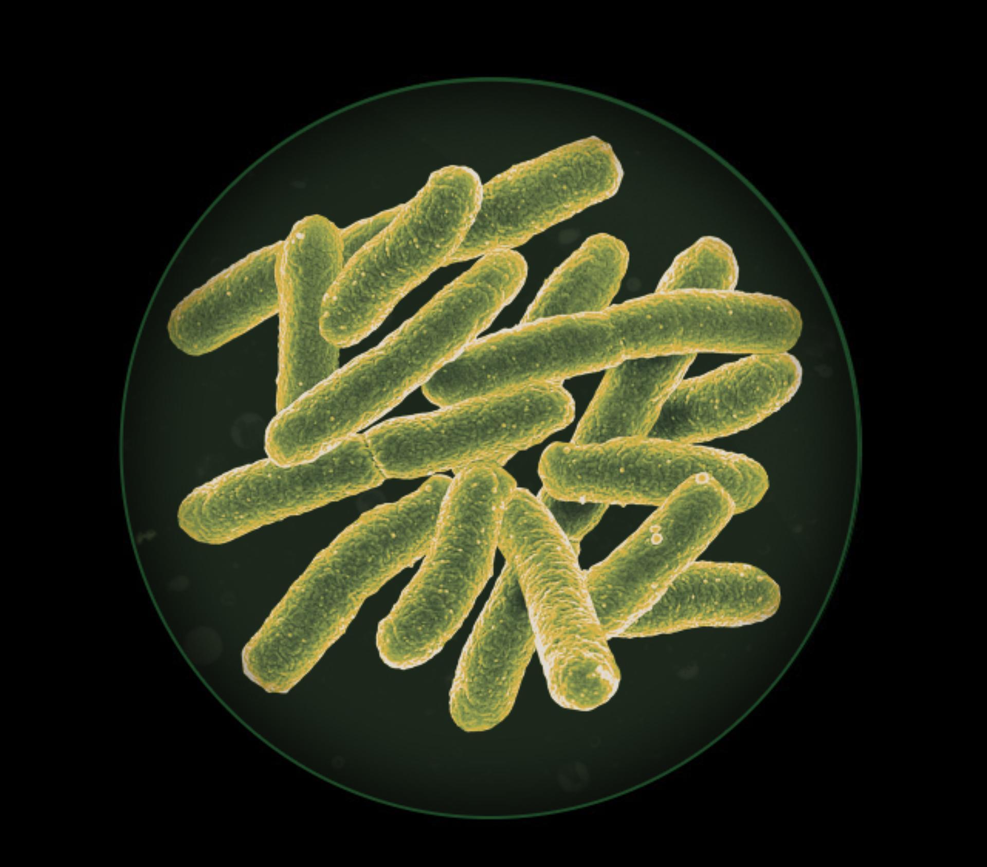 مخطط للبكتيريا والعفن