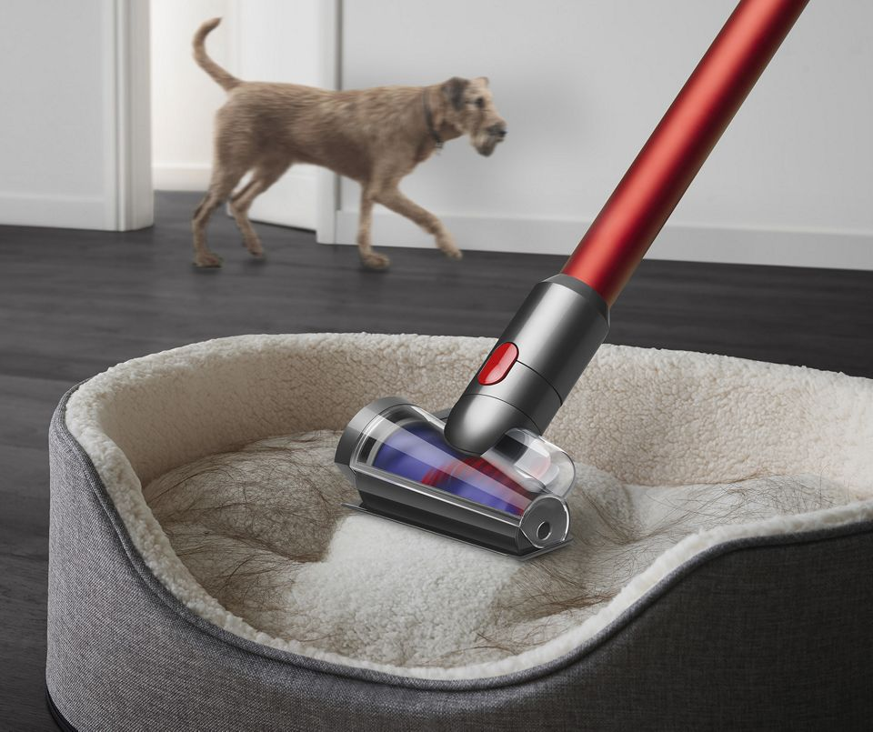 Dyson Outsize vacuum with Hair screw tool attachment cleaning hair from a dog bed.